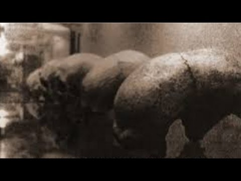The Missing Alien Bodies Of Malta | A Cover Up?