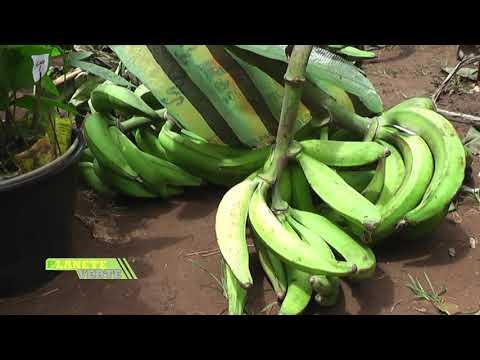 bande annonce  Planète Verte sur Canal2 International