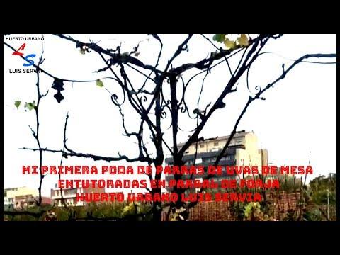 huerto urbano luis servia poda parras uvas de mesa youtube