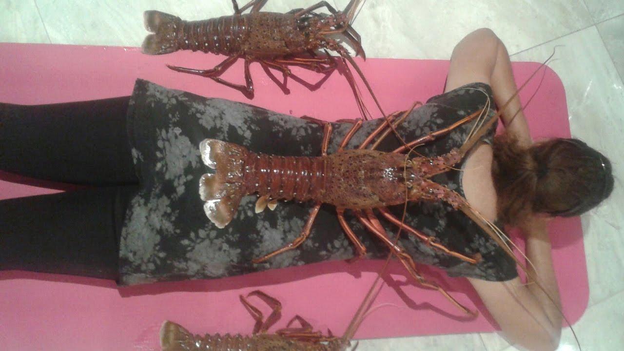 How To Catch Jumbo Crayfish Perth WA Western Rock Lobster - YouTube