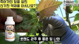 [한국농수산TV] 죽어가던 잎을 살린 신기한 약재를 아…