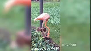 Steppy Boi #414