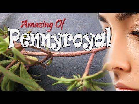 Amazing Of Pennyroyal