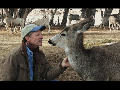 How a Human Became Part of a Wild Mule Deer Herd | Nature on PBS