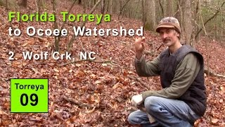 FL Torreya to Ocoee Watershed: 2. Wolf Creek, NC 2015