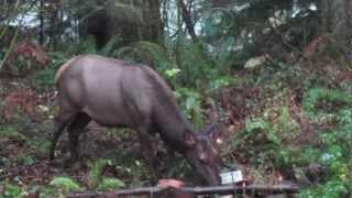 Elk and Bird feeder