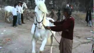 vuclip ustad asghar horse dans lado ana nankana 2012.mpg