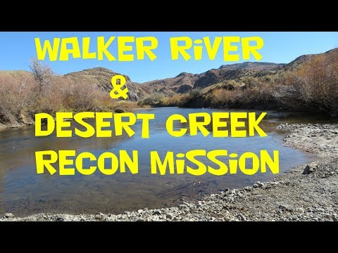 Walker River & Desert Creek Fishing Recon Mission