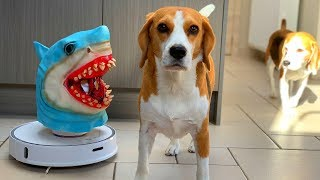 Dogs Vs Robot Shark Prank : Funny Dogs Louie and Marie