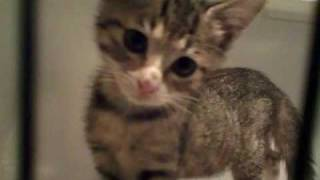 そこに何があるのか?ひたすらトイレの下が気になる子猫。