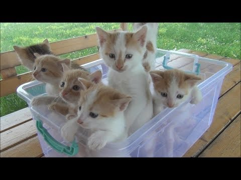 so cute kittens meowing in box (2018)
