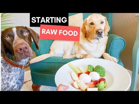 Starting Dogs on a Raw Food Diet