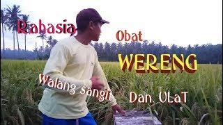Download lagu GILA..petani ini meracik minyak tanah dan sabun menjadi obat pertanian..