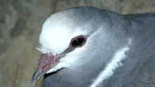 Creation vs. Evolution: Amazing Bird Migration