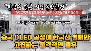 중국 OLED 공장이 한국산 설비만 고집하는 충격적인 이유