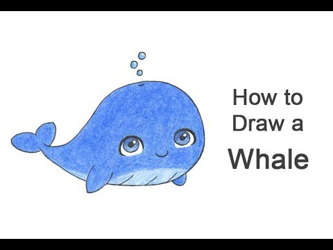 How To Draw A Whale Cartoon Youtube