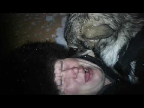После депрессии заводите собак и кошек.Это весело))).