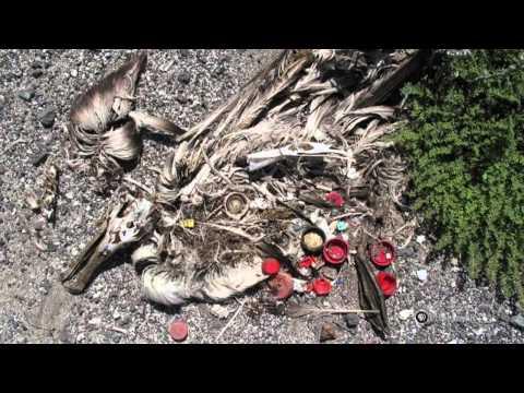 PBS Hawaii - HIKI N? Episode 308 | Waimea Canyon Middle School | Beach Debris