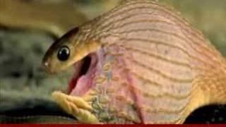 iğrenç yılan