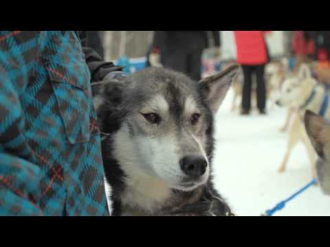 Winterdance Dogsledding Tours - A Day in Ontario's Backcountry