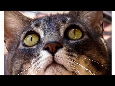 Dettato Il gatto goloso