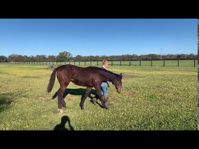 Previous x Super One 20 Filly (28.09.20)