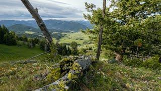 Teepee Creek Wildlife - Yellowstone