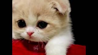 Милые котята | Подборка видео приколов про милых котят
