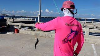 Fishing Skyway Pier Florida