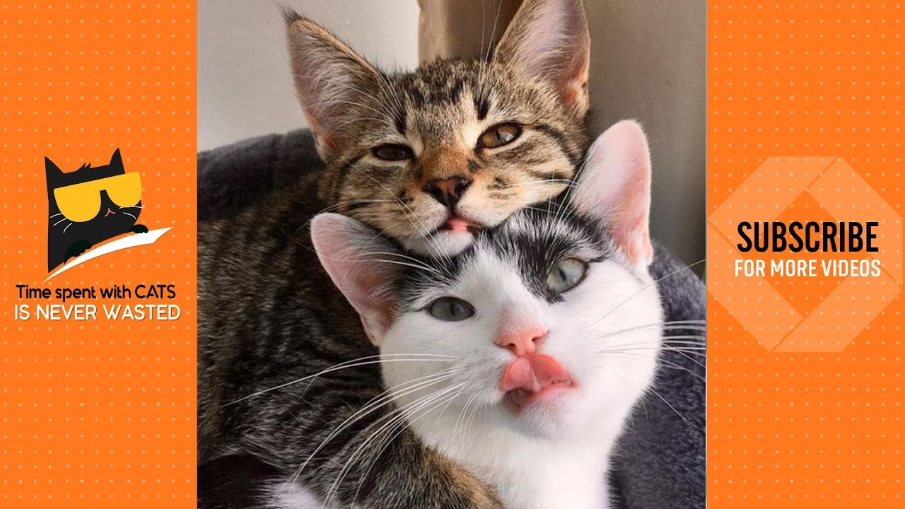Cute Cat Couple Ever Couple Cat Video 2019 Youtube