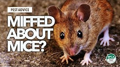 A-Z of Pests: Pest Advice for controlling Mice