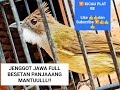 Cucak Jenggot Jawa Jernih Full Besetan Panjang Cocok Untuk Masteran Murai Kacer Lb Dll  Mp3 - Mp4 Download