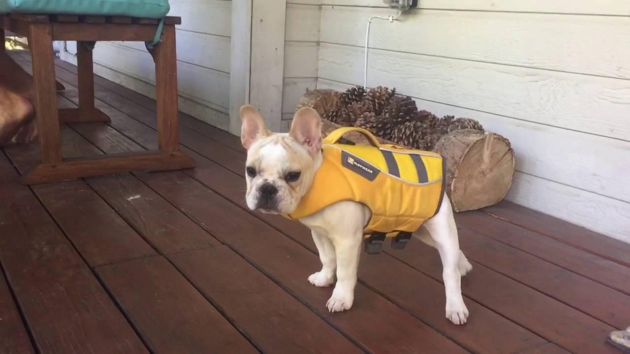 puppy life jacket youtube