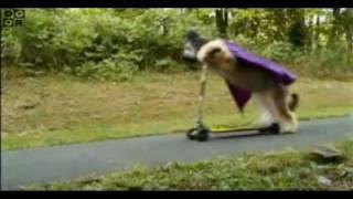 Cartoon Network - Süper Scooter Köpek