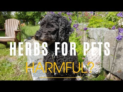 Herbs For Pets- Harmful Side Effects To Know About