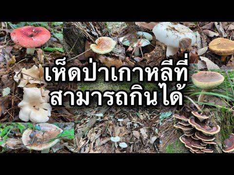 #เห็ดป่าเกาหลีกินได้#เก็บเห็ดในป่าเกาหลี#เก็บเห็ดเกาหลี#เห็ดป่ากินได้เกาหลี #แรงงานไทยในเกาหลี