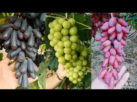 Fresh Fruits In China Fruit Farm #Mukbang | Eat Fruits In Fruit Farm | Best Fruit Eats TikTok Video