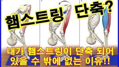 엉덩이(둔근),햄스트링(대퇴이두근,반건양근,반막양근) 고관절 기능적 움직임 신전 2편, 햄스트링이 단축 될 수 밖에 없는 이유! 벗윙크, 스쿼트 데드리프트가 안되는이유!