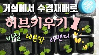 허브 바질 레몬밤 라벤더 수경재배로 거실에서 키워요^^…