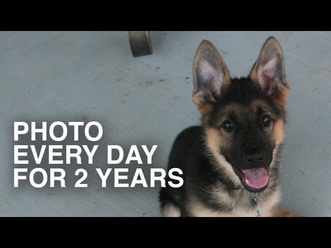 Photo every day for 2 years - Dunder the German Shepherd - compilation
