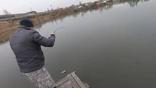 Нерестовый запрет Не не слышали на рыбалку в болота за окунем и не только