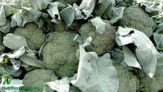 Syrová brokolice a přežití rakoviny močového měchýře