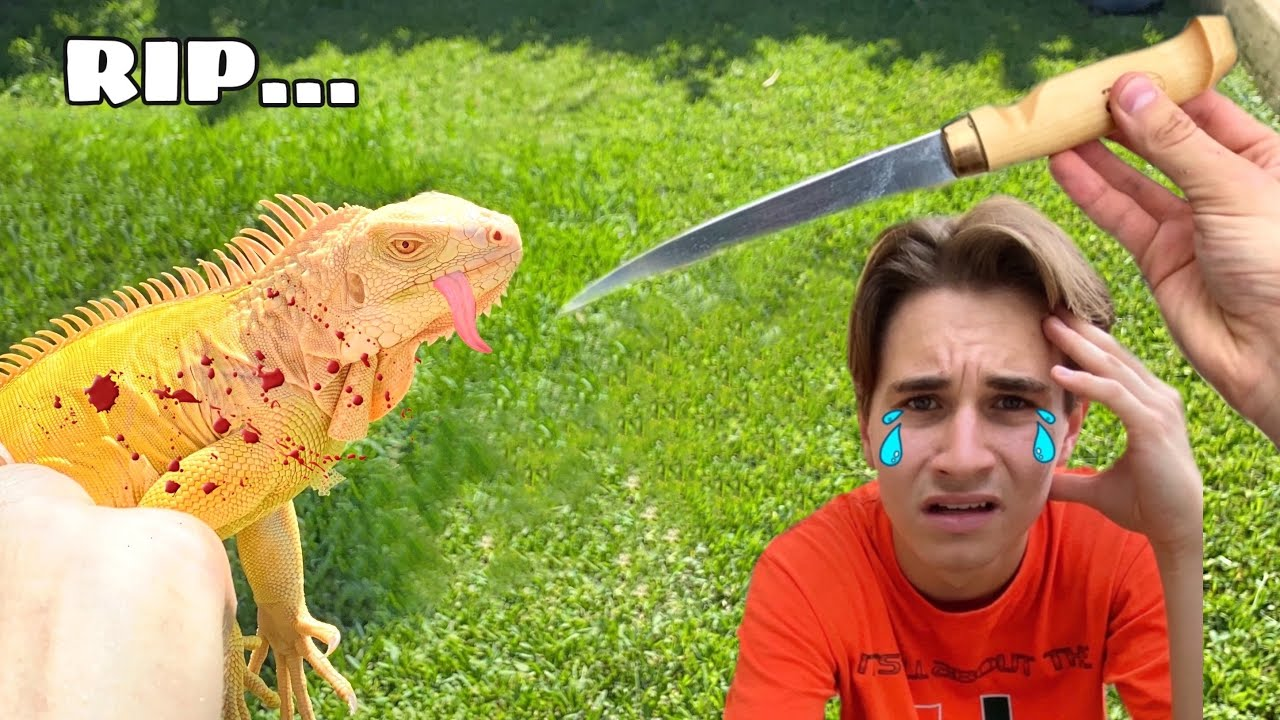 IGUANAS OFFICIALLY BANNED IN FLORIDA ! RIP MY PETS...