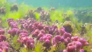 Cultured Coral Farm (Part 7)