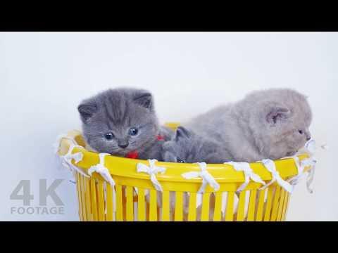 Basket Full of Kittens | Too Cute! 4K