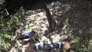 German Shepherd Dog Harness Run