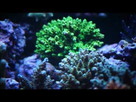 Yalcin KAYA reef Turkey