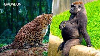 Así lucen estos 15 animales antes de dar a luz