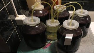 Мой опыт приготовления виноградного вина из сорта Изабелла
