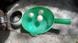 Nhúng nước kiểm tra trứng gà sắp nở